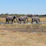 Touraco Tours - Pilanseberg Safaris