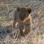 Touraco travel Services - Kruger Safaris